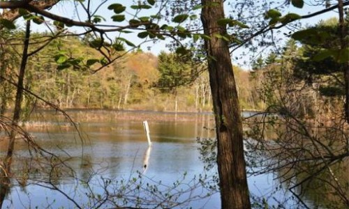 New Listing! 100 Wilson Way, Dover MA