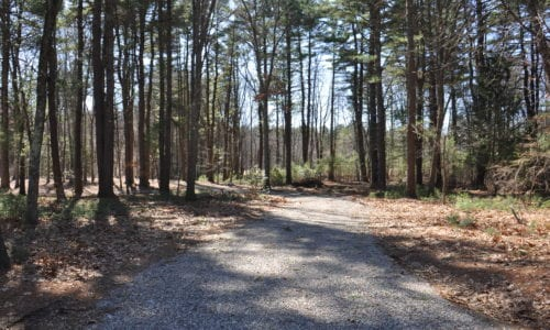 Exterior Wooded Photograph of Lot 1 & 3 Bubbling Brook in Walpole MA
